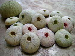 Polymer Clay Sea Urchins