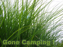 Green Beads - Gone Camping