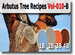 Arbutus Tree Color Palette