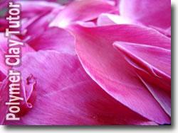 Peony Flower Petals
