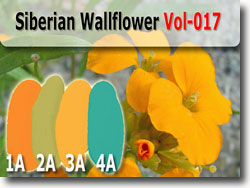 Siberian Wallflower Polymer Clay Color Palette