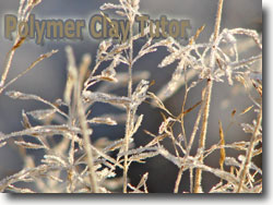 Frosty Winter Morning Grass