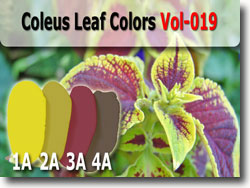 Coleus Leaf Polymer Clay Color Palette