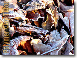 Frosty Leaves Texture Ideas