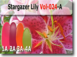 Stargazer Lily Polymer Clay Color Palette