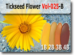 Tickseed Flower Polymer Clay Color Palette