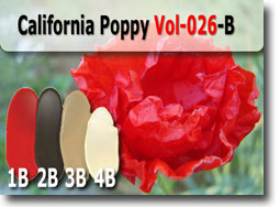 California Poppy, Polymer Clay Color Palette