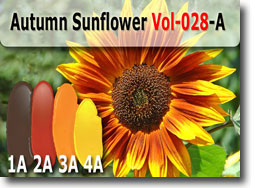 Autumn Sunflower Polymer Clay Color Palette