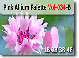 Pink Allium Polymer Clay Color Palette