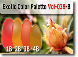 Exotic Color Palette by Polymer Clay Tutor