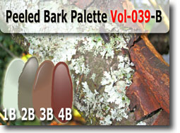 Peeled Bark Color Palette by Polymer Clay Tutor