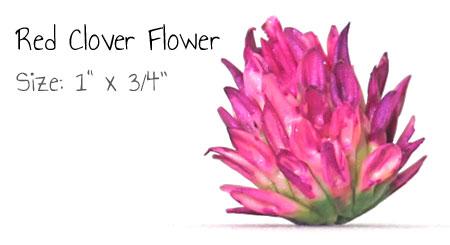 Polymer Clay Tutor Clover Flower Single