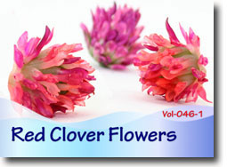 Red Clover Flowers - Polymer Clay Tutor