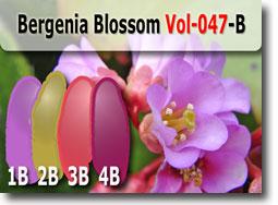 Bergenia Blossom Palette by Polymer Clay Tutor