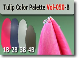 Tulip Color Palette by Polymer Clay Tutor