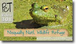 Nisqually Wildlife Refuge Frog In Swamp