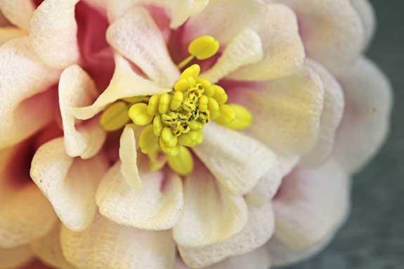 Columbine Hybrid Flower Polymer Clay Tutor