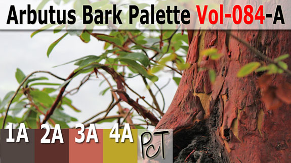 Arbutus Bark Palette by Polymer Clay Tutor