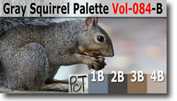 Gray Squirrel Palette by Polymer Clay Tutor