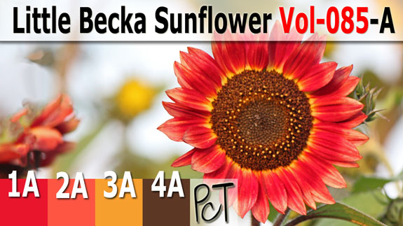 Little Becka Sunflower Palette by Polymer Clay Tutor