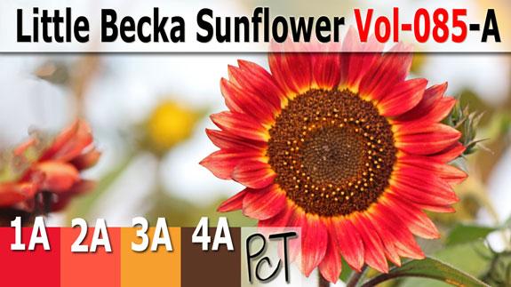 Little Becka Sunflower Palette by Polymer Clay Tutor