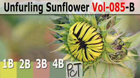Unfurling Sunflower Palette by Polymer Clay Tutor
