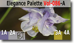 Elegance Palette by Polymer Clay Tutor