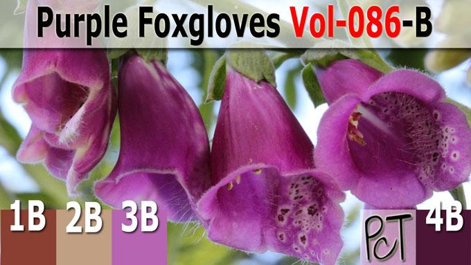 Purple Foxgloves Palette by Polymer Clay Tutor