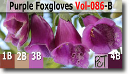 Purple Foxgloves Palette by Polymer Clay Tutor